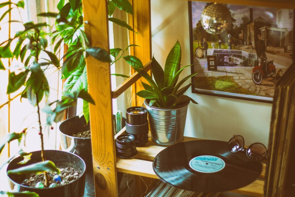 plantas de interior con vinilo