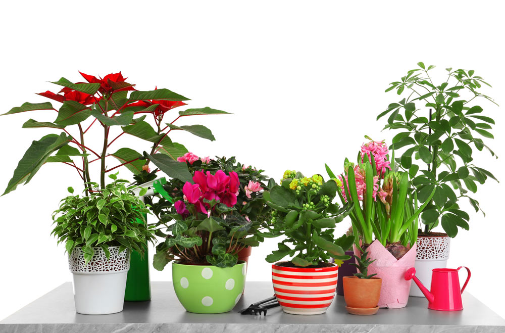 plantas variadas